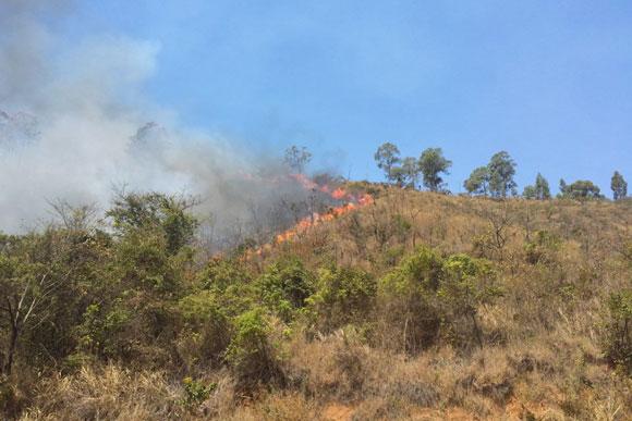 Incêndio consumiu mata por mais de 24h / Foto: Divulgação