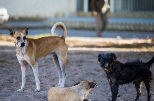 Resultado de imagem para abandono de cães na cidade