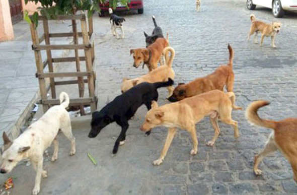 http://setelagoas.com.br/images/stories/2017/Agosto/politica/cachorros-na-rua-22.jpg